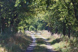 Natur pur – das ist ein Kennzeichen von Spandau. In den Ortsteile Gatow und Kladow kommen Naturliebhaber voll auf ihre Kosten. © N. Bettac